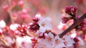 Tavaszi 2=3