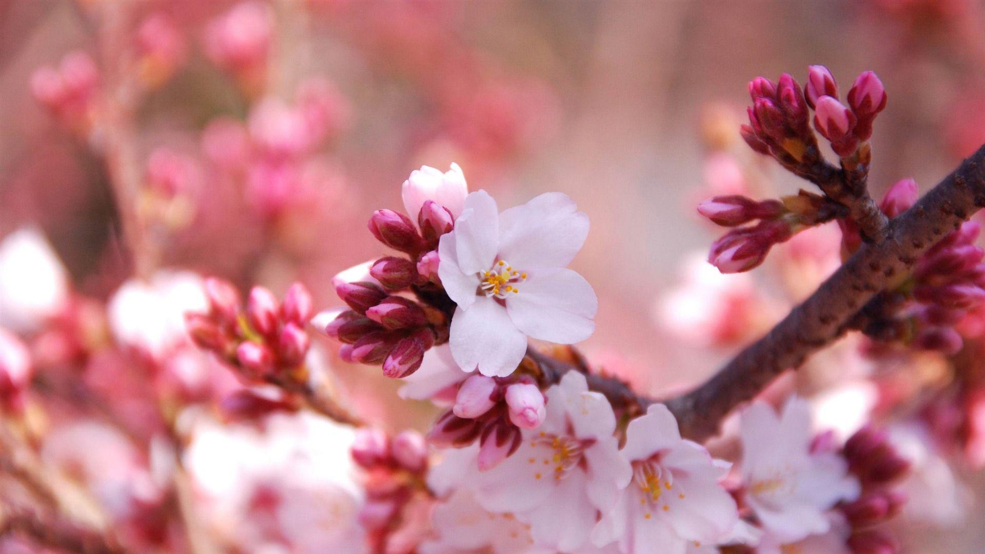 Tavaszi 2=3 akció